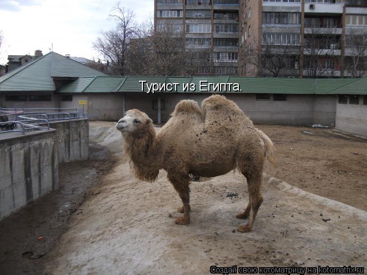 Котоматрица: Турист из Египта.