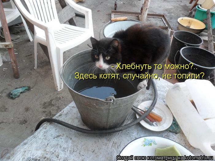 Котоматрица: - Хлебнуть то можно?.. Здесь котят, случайно, не топили?
