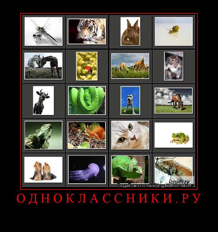 Котоматрица: Одноклассники.ру