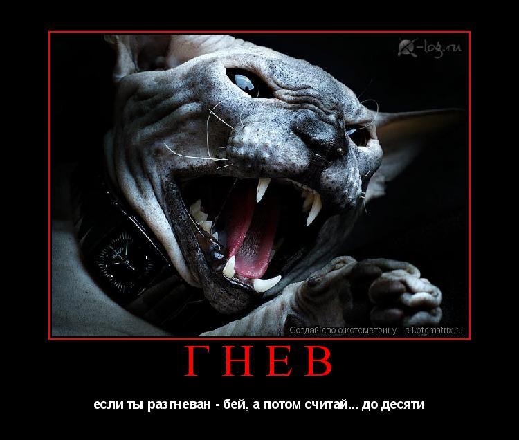 Котоматрица: гнев если ты разгневан - бей, а потом считай... до десяти