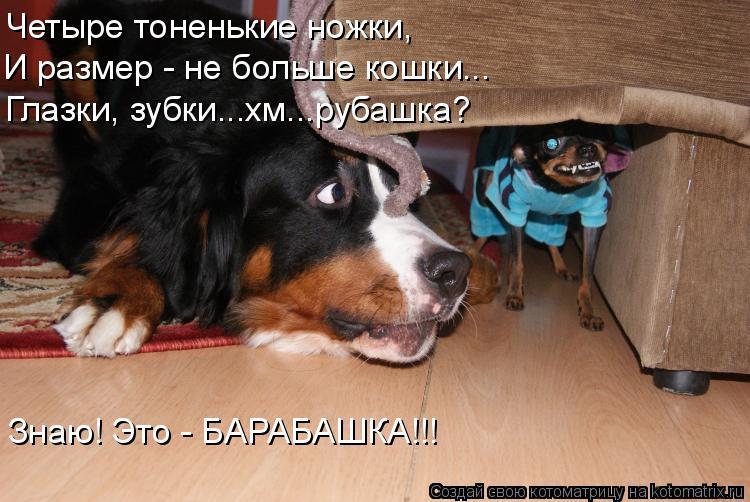 Котоматрица: Четыре тоненькие ножки, И размер - не больше кошки... Глазки, зубки...хм...рубашка? Знаю! Это - БАРАБАШКА!!!