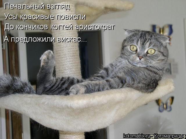 Котоматрица: Печальный взгляд Усы красивые повисли До кончиков когтей аристократ А предложили вискас...