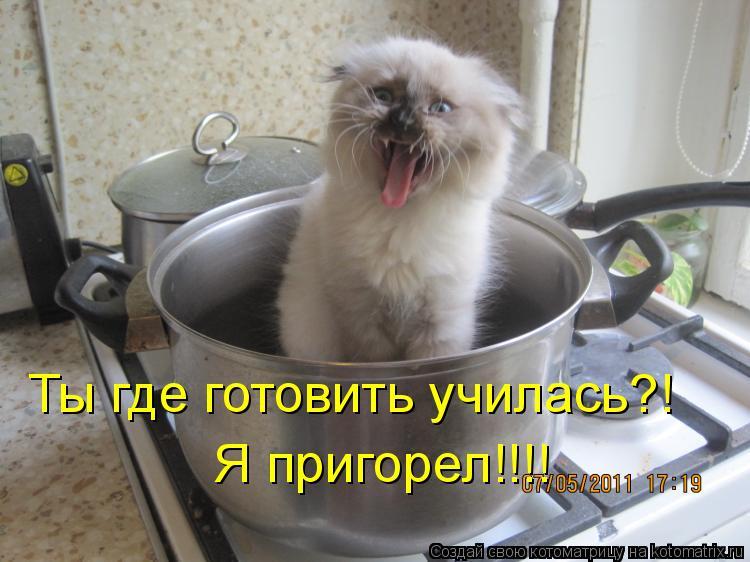 Котоматрица: Ты где готовить училась?!  Я пригорел!!!!