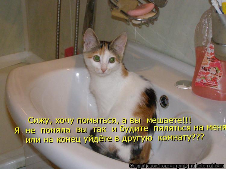 Котоматрица: Сижу, хочу помыться, а вы  мешаете!!! Я  не  поняла  вы  так  и будите  пяляться на меня   или на конец уйдёте в другую  комнату???