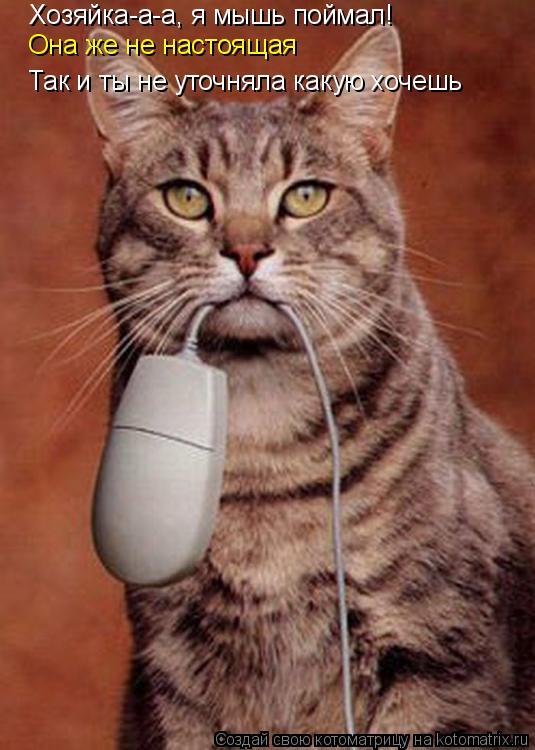 Котоматрица: Хозяйка-а-а, я мышь поймал! Она же не настоящая Так и ты не уточняла какую хочешь