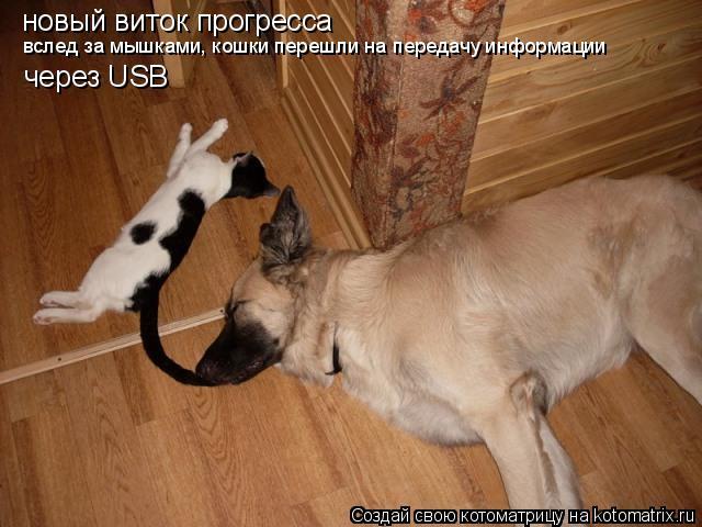 Котоматрица: новый виток прогресса вслед за мышками, кошки перешли на передачу информации через USB