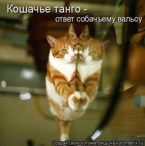 Котоматрица: Кошачье танго -  ответ собачъему вальсу