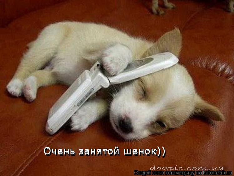 Котоматрица: Очень занятой шенок)) Очень занятой шенок))