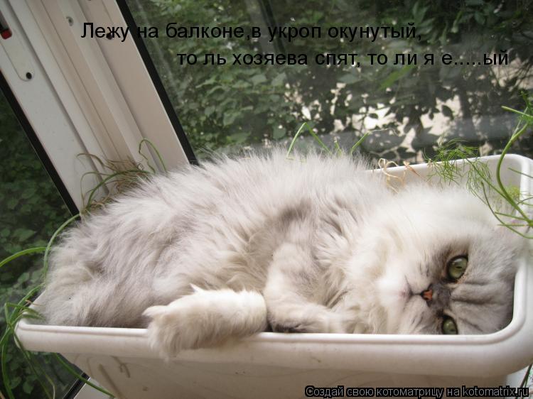 Котоматрица: Лежу на балконе,в укроп окунутый, то ль хозяева спят, то ли я е.....ый