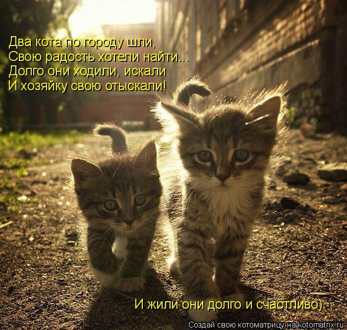 Котоматрица: Свою радость хотели найти... Два кота по городу шли, Долго они ходили, искали И хозяйку свою отыскали! И жили они долго и счастливо)