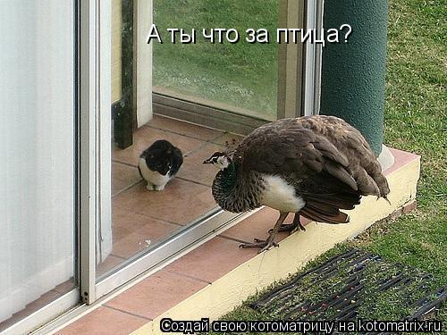 Котоматрица: А ты что за птица?