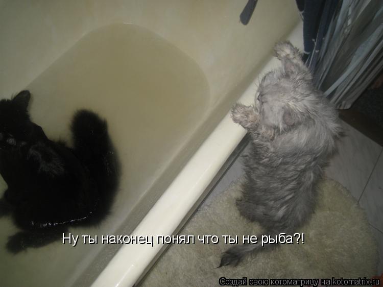 Котоматрица: Ну ты наконец понял что ты не рыба?!