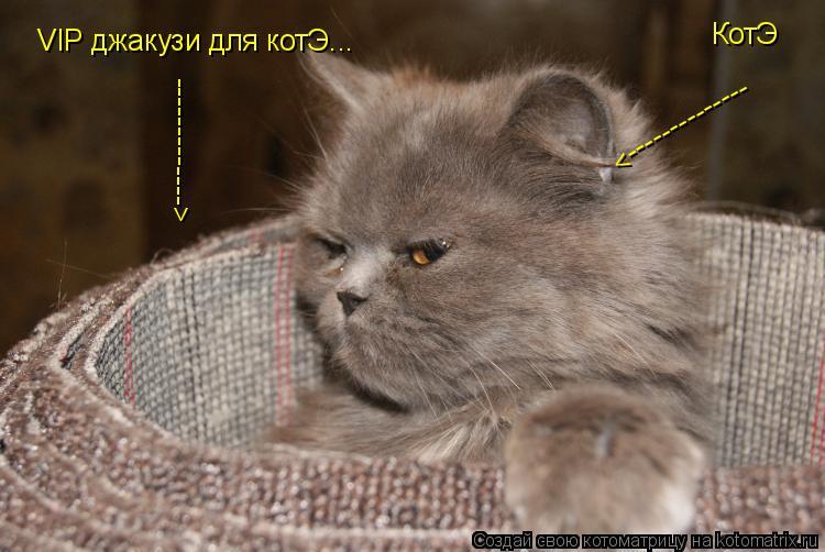 Котоматрица: VIP джакузи для котЭ... -------------> КотЭ -------------->