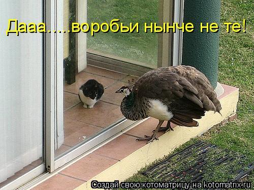 Котоматрица: Дааа.....воробьи нынче не те!