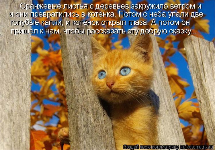 Котоматрица: Оранжевые листья с деревьев закружило ветром и и они превратились в котёнка. Потом с неба упали две голубые капли, и котёнок открыл глаза. А
