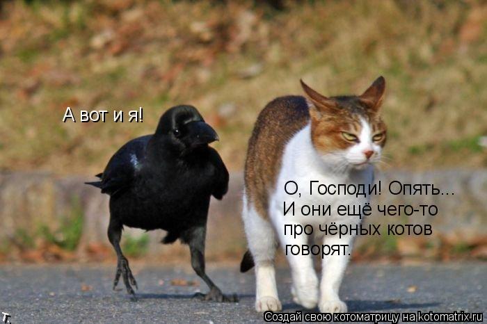 Котоматрица: А вот и я! О, Господи! Опять... И они ещё чего-то про чёрных котов говорят.