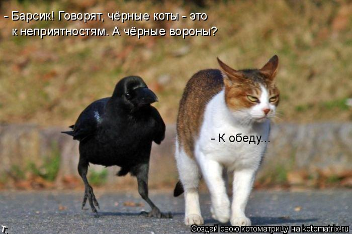 Котоматрица: - Барсик! Говорят, чёрные коты - это к неприятностям. А чёрные вороны? - К обеду...