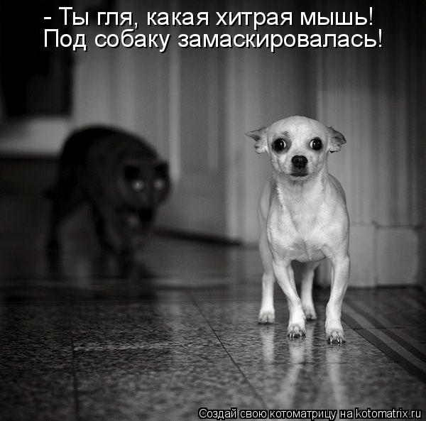 Котоматрица: - Ты гля, какая хитрая мышь! Под собаку замаскировалась!