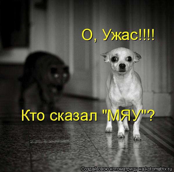 "Котоматрица: О, Ужас!!!! Кто сказал ""МЯУ""?"