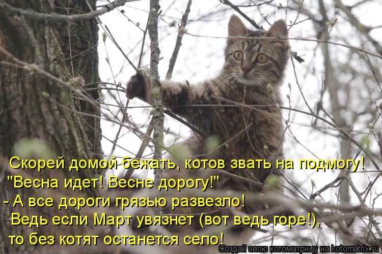 """Котоматрица: Скорей домой бежать, котов звать на подмогу!  """"Весна идет! Весне дорогу!""""  - А все дороги грязью развезло! Ведь если Март увязнет (вот ведь горе!"""