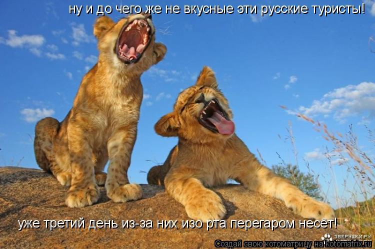 Котоматрица: ну и до чего же не вкусные эти русские туристы!  уже третий день из-за них изо рта перегаром несёт!