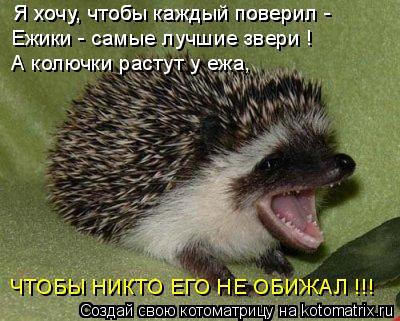 Котоматрица: Я хочу, чтобы каждый поверил -  Я хочу, чтобы каждый поверил -  Ежики - самые лучшие звери !  А колючки растут у ежа, ЧТОБЫ НИКТО ЕГО НЕ ОБИЖАЛ !!!
