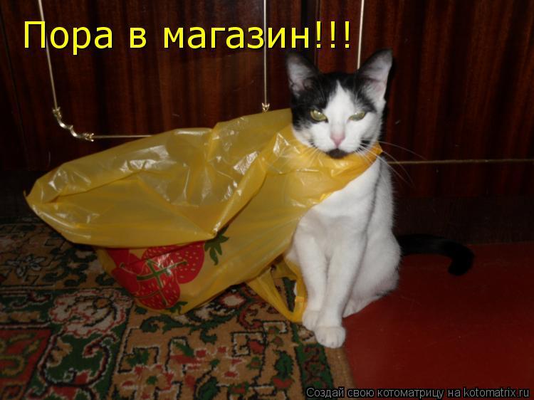 Котоматрица: Пора в магазин!!!