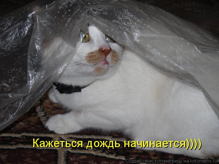 Котоматрица: Кажеться дождь начинается))))
