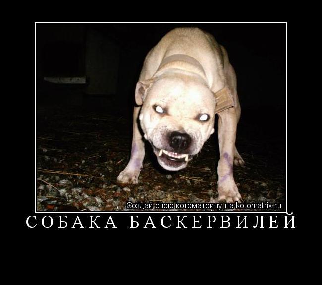 Котоматрица: Собака Баскервилей
