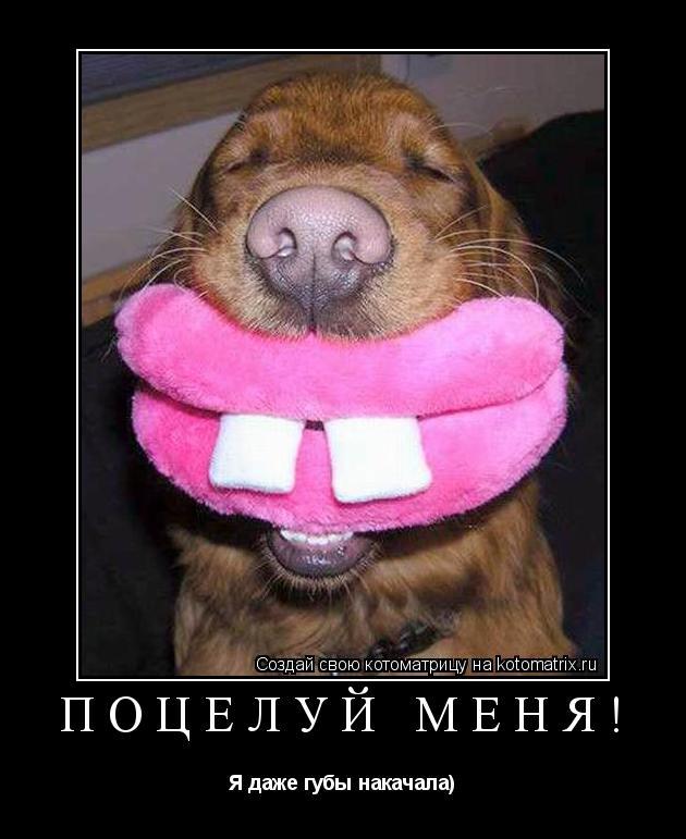 Котоматрица: Поцелуй меня! Я даже губы накачала)