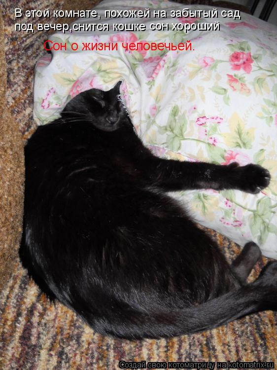 Котоматрица: В этой комнате, похожей на забытый сад под вечер,снится кошке сон хороший Сон о жизни человечьей.