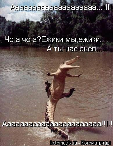 Котоматрица: Аааааааааааааааааааа...!!!!!Чо а,чо а?Ежики мы,ежики.... Чо а,чо а?Ежики мы,ежики.... А ты нас сьел..... Ааааааааааааааааааааааа!!!!!........