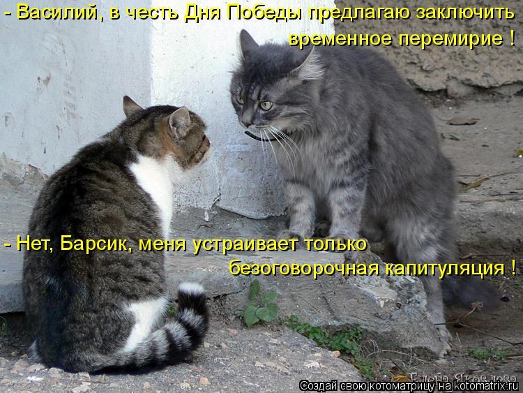 Котоматрица: - Василий, в честь Дня Победы предлагаю заключить безоговорочная капитуляция ! - Нет, Барсик, меня устраивает только  временное перемирие !