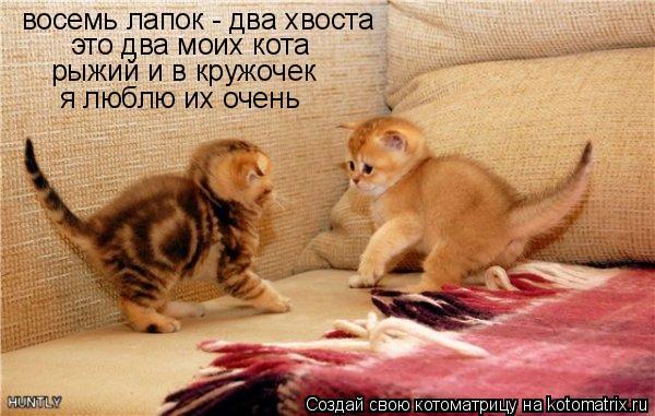 Котоматрица: восемь лапок - два хвоста это два моих кота рыжий и в кружочек  я люблю их очень