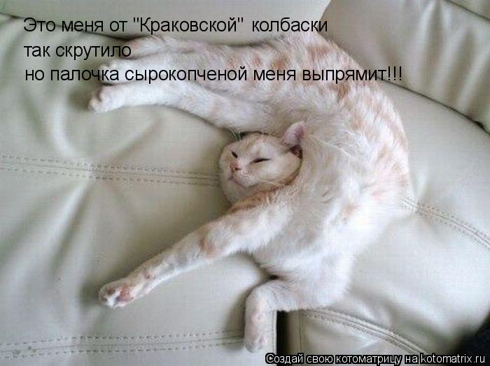 """Котоматрица: Это меня от """"Краковской""""  так скрутило колбаски но палочка сырокопченой меня выпрямит!!!"""