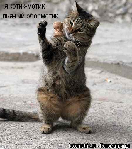Котоматрица: я котик-мотик пьяный обормотик
