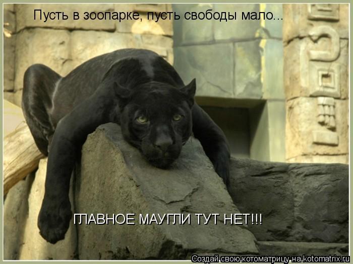 Котоматрица: Пусть в зоопарке, пусть свободы мало... ГЛАВНОЕ МАУГЛИ ТУТ НЕТ!!!