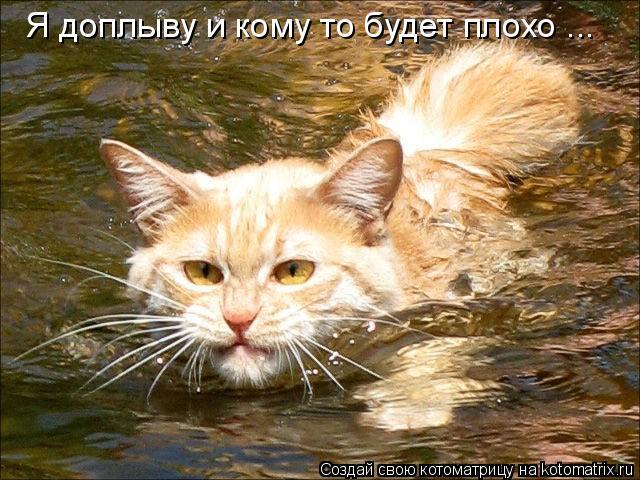 Котоматрица: Я доплыву и кому то будет плохо ...
