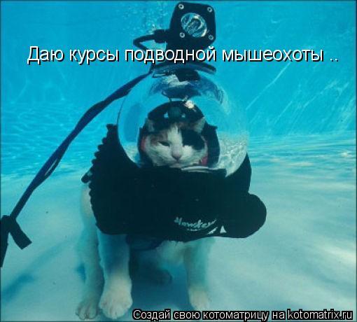 Котоматрица: Даю курсы подводной мышеохоты ..