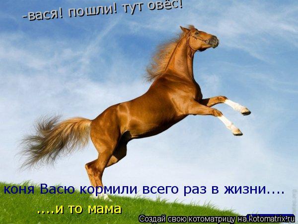 Котоматрица: -вася! пошли! тут овёс! коня Васю кормили всего раз в жизни.... ....и то мама