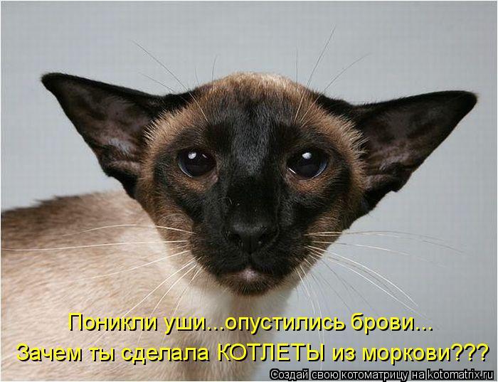 http://kotomatrix.ru/images/lolz/2011/05/11/905019.jpg