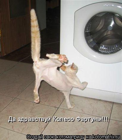 Котоматрица: Да здравствуй Колесо Фартуны!!!