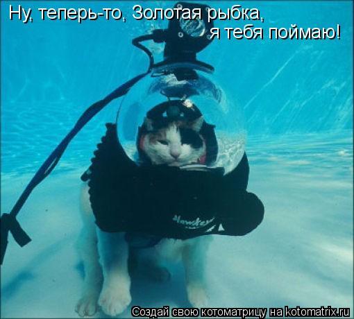 Котоматрица: Ну, теперь-то, Золотая рыбка,  я тебя поймаю!