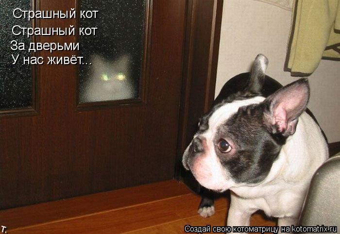 Котоматрица: Страшный кот Страшный кот Страшный кот За дверьми У нас живёт...