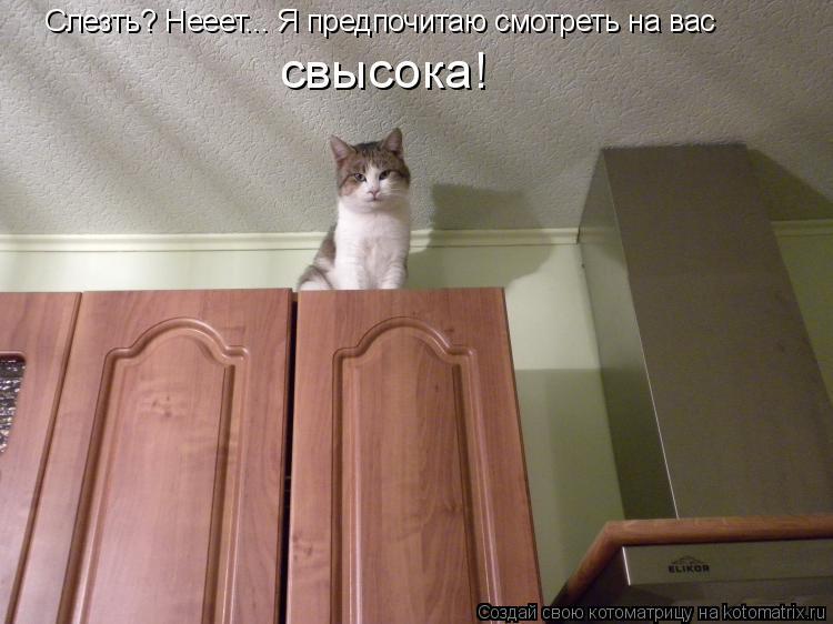 Котоматрица: Слезть? Нееет... Я предпочитаю смотреть на вас свысока!