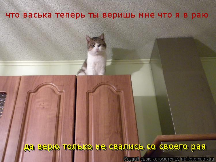 Котоматрица: что васька теперь ты веришь мне что я в раю да верю только не свались со своего рая да верю только не свались со своего рая