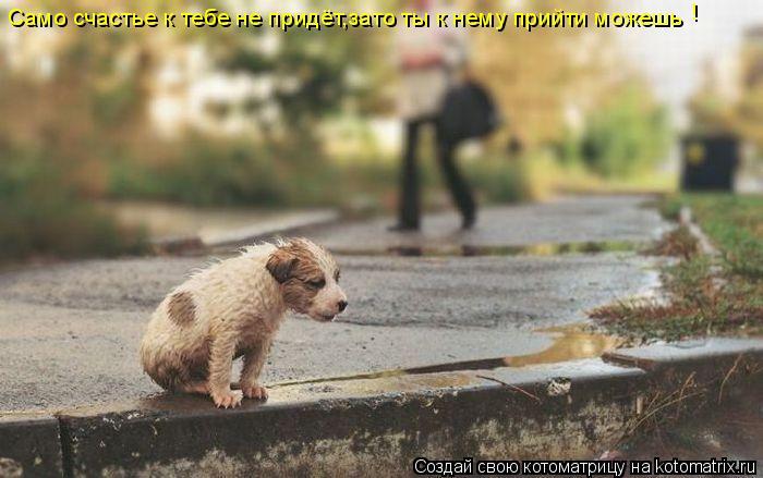 Котоматрица: Само счастье к тебе не придёт,зато ты к нему прийти можешь !
