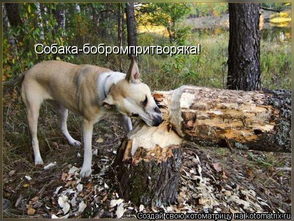 Котоматрица: Собака-бобромпритворяка!