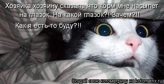 Котоматрица: Хозяйка хозяину сказала,что корм мне насыпет  на глазок. На какой глазок?! Зачем?!! Как я есть-то буду?!!