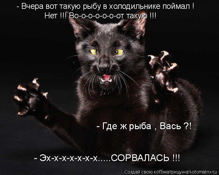 Котоматрица: - Где ж рыба , Вась ?! - Эх-х-х-х-х-х-х.....СОРВАЛАСЬ !!!  - Вчера вот такую рыбу в холодильнике поймал !  Нет !!! Во-о-о-о-о-о-от такую !!!